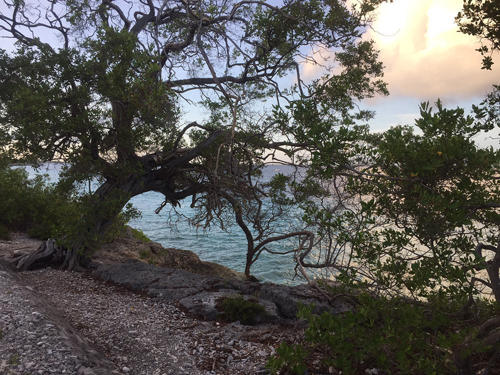 Hardlopen Bonaire 9